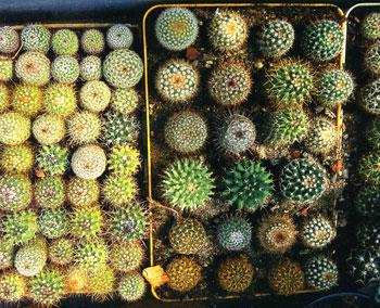 kaktus_04.jpg