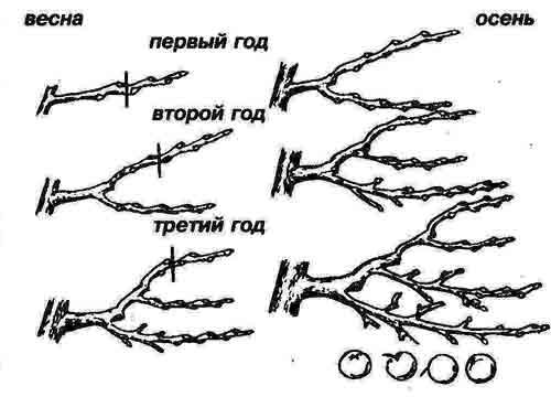 Обрезка деревьев и кустарников