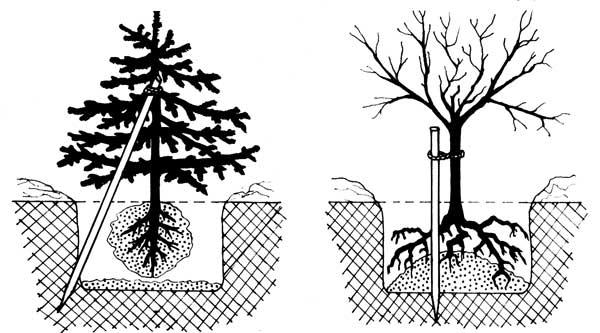 Методы выращивания леса 76