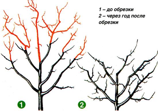 забудьте как обрезать высокую рябину разных районах Казани