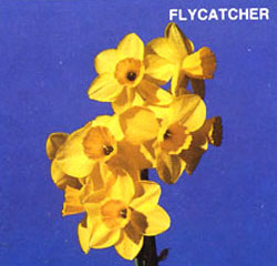 FLYCATHER