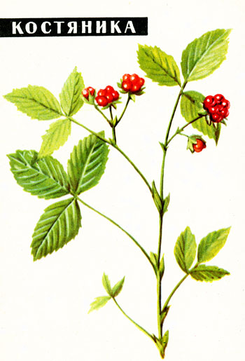 костяника ягода рецепты приготовления